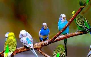 Время жизни попугаев