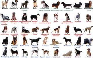 Типы пород собак