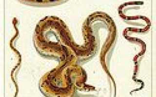 Наука о рептилиях