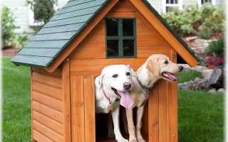 Мелкие сторожевые породы собак