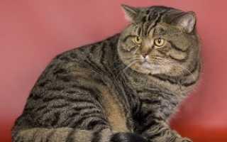 Коты тигрового окраса фото
