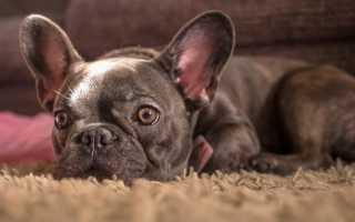Распространенные породы собак