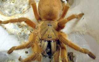 Как часто кормить паука