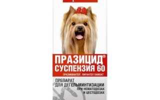 Празицид суспензия: инструкция по применению для кошек и собак, показания к использованию и побочные действия