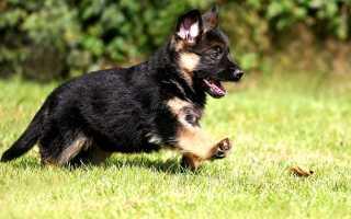 Воспитание щенка: как правильно выполнять дрессировку и когда нужно начинать обучение