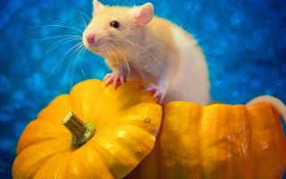 Годы жизни крысы