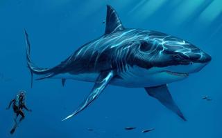Самые большие акулы в мире мегалодон