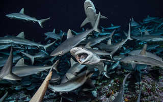 Кто питается акулами