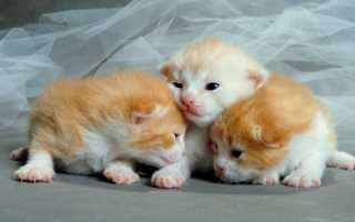 Как открываются глаза у котят этапы
