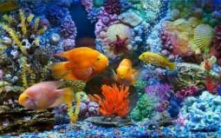 Стресс аквариумных рыбок