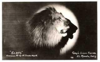 Лев MGM был не один: имена, истории, годы их участия
