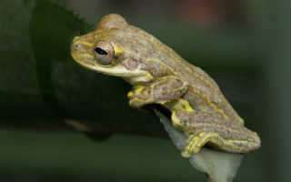 Виды жаб фото и названия