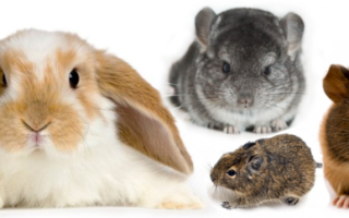 Кролики и хомяки
