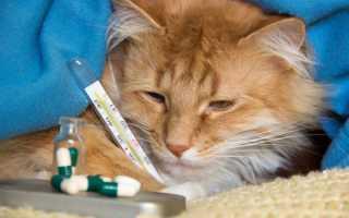 Кошка простыла чем лечить